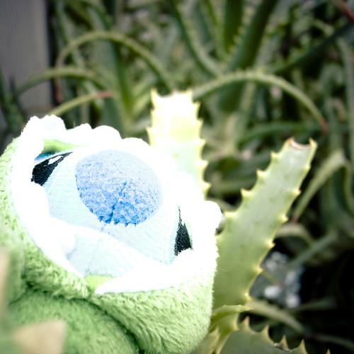 Hiding Amongst the Aloe