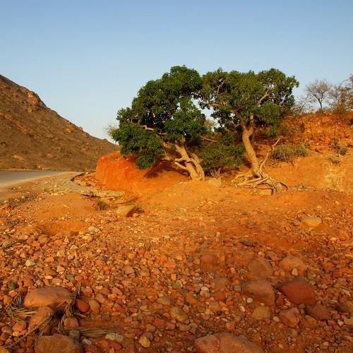 Green Means Life ~ Socotra Island, Yemen