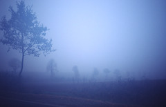 Foggy dawn (Sven T.) Tags: morning autumn trees film weather fog analog 35mm dawn nebel herbst dia slidefilm bume wetter morgens compactcamera diafilm morgendmmerung smallformat leicamini frhnebel kreisunna kleinbild kompaktkamera districtunna konicaminoltadimagescaneliteii frndenberganderruhr
