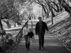 Strolling on a Sunday... (negra223) Tags: trees light people blackandwhite bw sunlight fall nature leaves lines fence walking couple shadows map path lol details sunday angles covered leaning leading lightposts stalking allrightsreserved brooklynbotanicalgardens strolling upthehill playingwiththelight niftyfifthy thingsthatcatchmyeye negra223 shootinbw