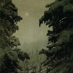 glimpse of the sun (jssteak) Tags: trees winter light snow mountains texture forest vintage square colorado shadows grunge laden squareformat snowshoein