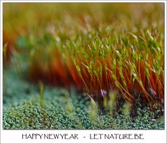 HAPPY NEW YEAR   -   LET NATURE BE (paolo brunetti) Tags: naturaleza gelo nature natureza natur que cambio faire feliz ser eis felice novo ao 2009 hielo ano nuevo afrikaans glace happynewyear 2010 deja anno climtico zum fondre contaminacin nuovo poluio gelukkige verschmutzung klimawandel derreter respecte schmelzen alteraes derretir rispetta respeita respeta climticas changements climatiques nuwejaar letnaturebe
