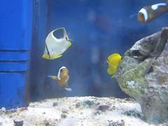 tropical fish for sale, dora's friends