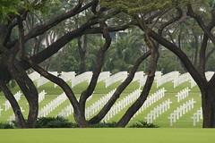 Trees (Poker Face (Pastilan pasaway!)) Tags: cemetery graveyard canon photo memorial flag philippines american manila warmemorial necropolis philippine americanmemorial manilaamericanmemorial