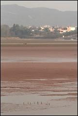 (Aks Grift) Tags: pakistan birds islamabad rawallake