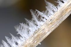 frost (*Monika*) Tags: winter snow nature nikon frost bokeh d2x natura zima kilworth