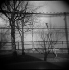 (@kaoring) Tags: shadow bw tree film holga walk 6×6 selfdevelopment