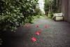 雨上がりの落花