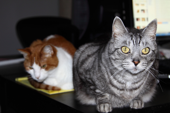 022810_cats_new