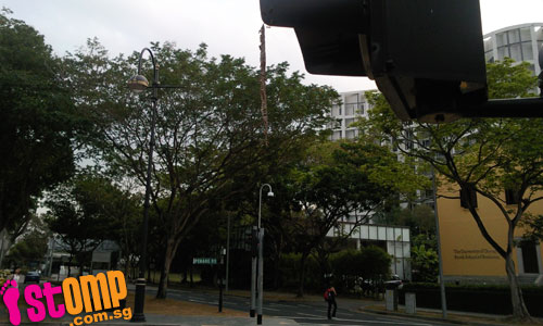 So dangerous! Bee's nest hangs from traffic light at Penang Road