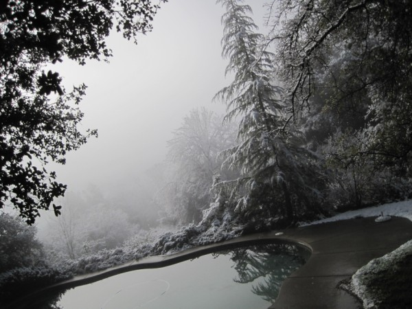 snow2010 038 (600 x 450)