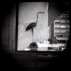 Black Ibis (J.T.R.) Tags: toronto heron beautiful downtown loureed melancholy rom iphone inmyhead autaut hipstamatic isagreatphotographer iwashearingdisorderbyjoydivision whilecomposing