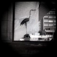 Black Ibis (J.T.R.) Tags: toronto heron beautiful downtown loureed melancholy rom iphone inmyhead autaut hipstamatic isagreatphotographer iwashearingdisorderbyjoydivision whilecomposing