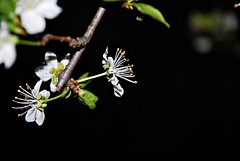 tenera  la notte (matyb59) Tags: naturethroughthelens allegrisinasceosidiventa