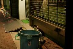 Treasure hunt (H2@Japan) Tags: street japan cat tokyo nikon kitty 日本 東京 猫 straycat d300 野良猫