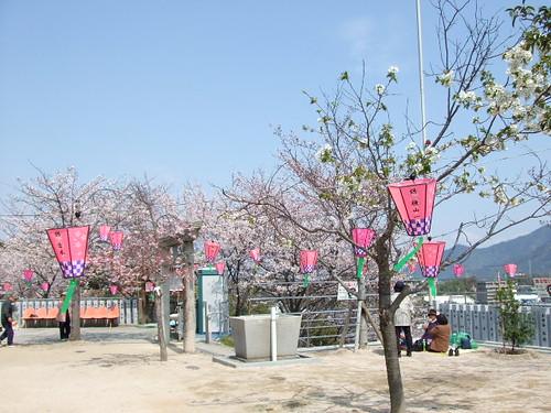 広島 桜 名所 21