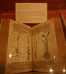 another botanical book - lavendula