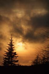 Sunset (Clyde Barrett (0ffline)) Tags: trees sunset sky cloud newfoundland dusk nl nfld clydebarrett