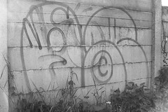 le (leguaninvasion) Tags: le 89 throwup leguan