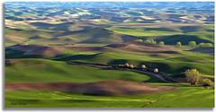 A closer look (walla2chick) Tags: road trees usa clouds washington shadows hills wa palouse palousehills steptoebutte 3780 paintingvenice topazadjust 2780tpzaven
