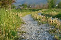 A gravel road (Beckywithasmile) Tags: travel light color green grass june rock japan grey spring weeds nikon rocks hokkaido path trail   gravel       beckywithasmile june2011 d5100 nikond5100
