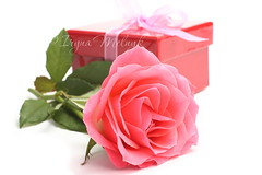 Pink rose and red gift box (Iryna Melnyk) Tags: pink wedding white holiday plant flower color green love nature glass floral beautiful beauty rose composition leaf colorful day married natural bright symbol blossom box background decoration mother valentine romance fresh petal celebration pot event gift present bunch bloom romantic botanic bouquet copyspace shape decor arrangement isolated insert blooming giftbox
