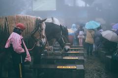 清境農場|合歡山 Hehuanshan (里卡豆) Tags: olympus penf 清境 25mm f12 pro 2512pro 綿羊 南投 台灣 合歡山 清境農場 taiwan sheep hehuanshan