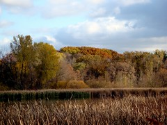 Fall Color Hill (Mike Tauer) Tags: tree fall minnesota golden plymouth mn timbershorespark