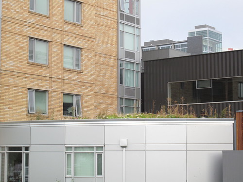 rooftop garden, greenroof