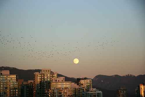 Crows at moonrise
