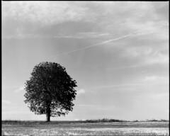 Tree by Utmarken, RZ version (JPlater) Tags: bw lund tree mamiya film d76 filter epson f56 polarizer expired tmax100 rz67 110mm v500 utmarken