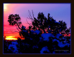 Beautiful Sunset (mountainbeliever) Tags: trees snow nature colors beauty clouds woodland colorado colorful skies shadows sunsets treetops picnik winterwonderland horizons allsky winterscenery eveningskies colorfulskies colorfulcolorado iloveclouds colorfulsunsets skytheme wintersunsets reddoorfotographie snowysunsets wintersincolorado