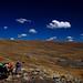 Mule Train - Cordillera Real - Bolivia