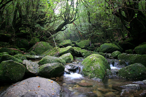 Yakushima River - 03
