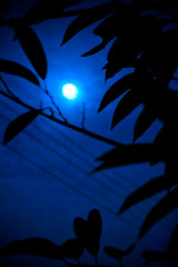 Once in a blue moon.. (categg) Tags: nikon tripod nightshoot d300 1870mmf3545