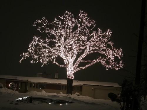 IMG_0020: 40,000 Lights