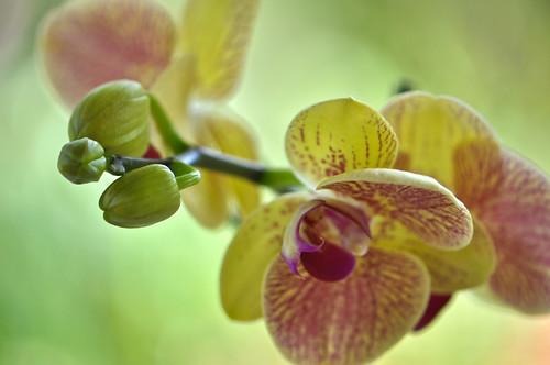 Orchid in Sunlight