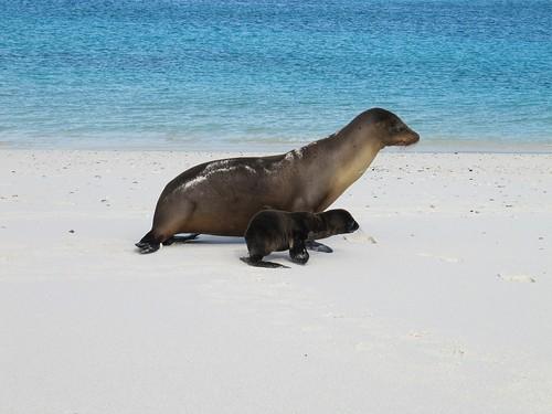 Ecuador Galapagos, 02 Jan 2010