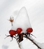 ".......cappello di neve..... ("" paolo ammannati "") Tags: natura neve toscana verna casentino ghiaccio flickrdiamond effettinaturali fotoconneve panoramaconneve"