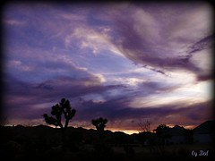 "****""awesome glory"" eve sunset HiDesert (dagutzyone ) Tags: california sunset nature scenery desert joshuatree valley yucca mojavedesert joshuatreenationalpark yuccavalley morongobasin dagutzyone mygearandmepremium mygearandmebronze mygearandmesilver mygearandmegold"