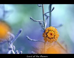 Different details... (LORD OF THE FLOWERS) Tags: mine schn akvaryum xxxxxxxx topseven crazyheart natureselegantshots 100commentgroup schneralsschnwrdeichsagen