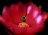 hidden treasure (Jose Luis Mieza Photography) Tags: flowers flores flower fleur fleurs flor fflower benquerencia florews reinante jlmieza thesuperbmasterpiece theperfectpinkdiamond reinanteelpintordefuego joseluismieza