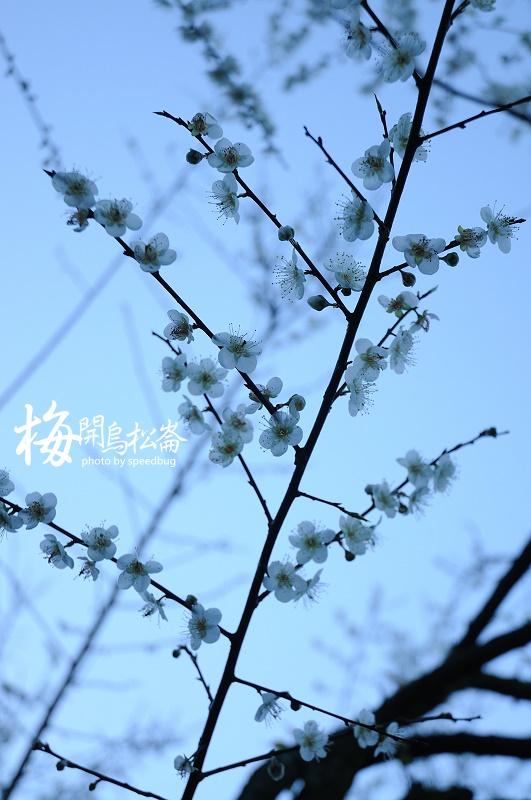 梅開烏松崙  (1).jpg