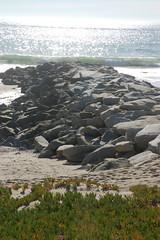Seagull (loudguitars) Tags: ocean beach pacific seagull rockpier marvinbraudebiketrail