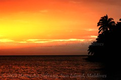 Sunset on the Sun Island, Maldives (From Afghanistan With Love) Tags: world ocean travel sunset sea sun beach water palm gradient maldives 2009 zeerak safrang hamesha javaid