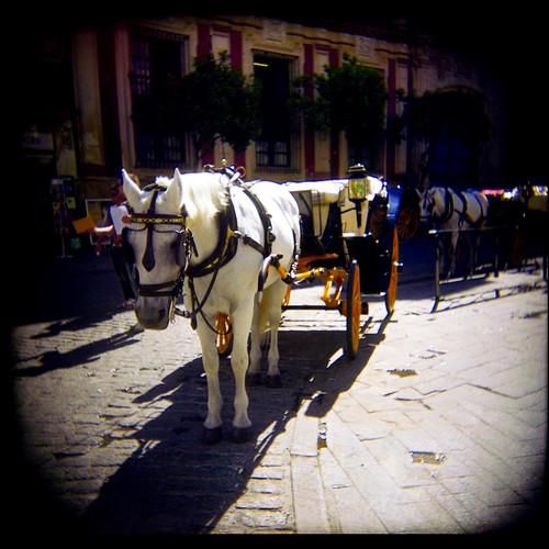 Holga Horse