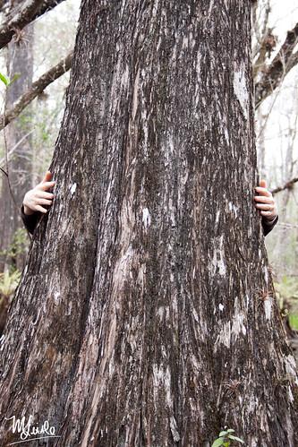 kathy treehugger