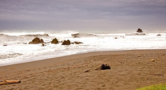 Del Norte County Coast - California (kmanohar) Tags: california ca northerncalifornia worldheritagesite nationalparkservice westcoast pacificcoast californiacoast redwoodnationalpark delnortecounty platetectonics klamath northerncaliforniacoast temperaterainforest redwoodpark redwoodcoast northamericanplate pacificrainforest klamathcalifornia subductionzone juandefucaplate tsunamizone klamathca internationalbiospherereserve redwoodpreserve cascadiasubductionzone californiarainforest delnortecalifornia delnorteca northwestrainforest cascadiazone tsunamidangerzone juandefucaoceanicplate megathrustearthquakes redwoodreserve cascadiaearthquake cascadiamegathrustzone cascadiacoast