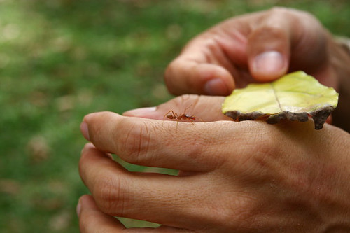 ant mimic spider on my hand