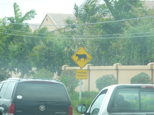 panther crossing.